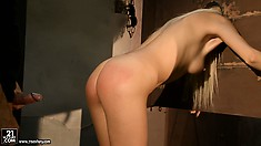 Skinny blonde hottie gets locked in the harness and blows the slave collector