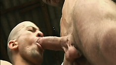 Three hot guys with muscled bodies engage in hot gay action in the barn